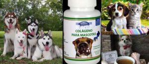 Conozca Estos 5 Beneficios del Colágeno Para Perros y Otras Mascotas: Con Recetas Incluidas | Arriba Salud