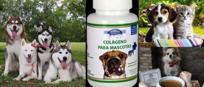 la salud de las mascotas