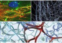 cual es la estructura de la matriz extracelular