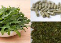 propiedades medicinales de la lechuga silvestre