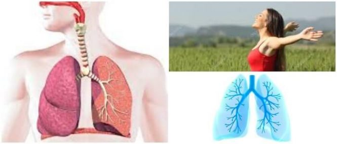 el sistema respiratorio humano y sus partes