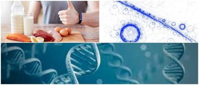 clasificacion de las proteinas segun su funcion