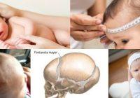 puntos blandos del cráneo