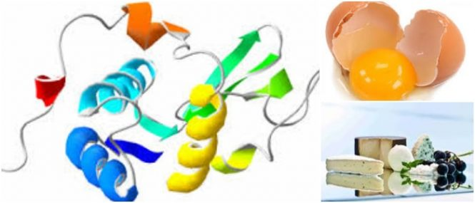 enzima antimicrobiana