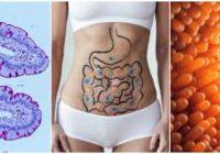 vellosidades intestinales atrofiadas